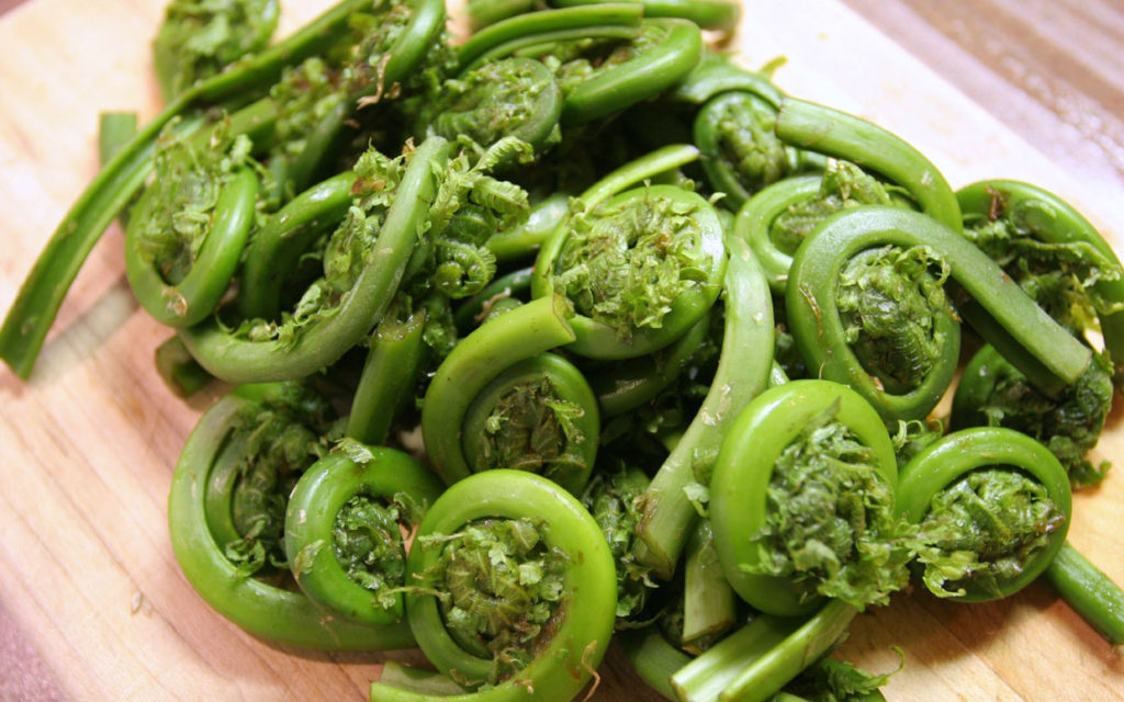 Fiddlehead Ferns