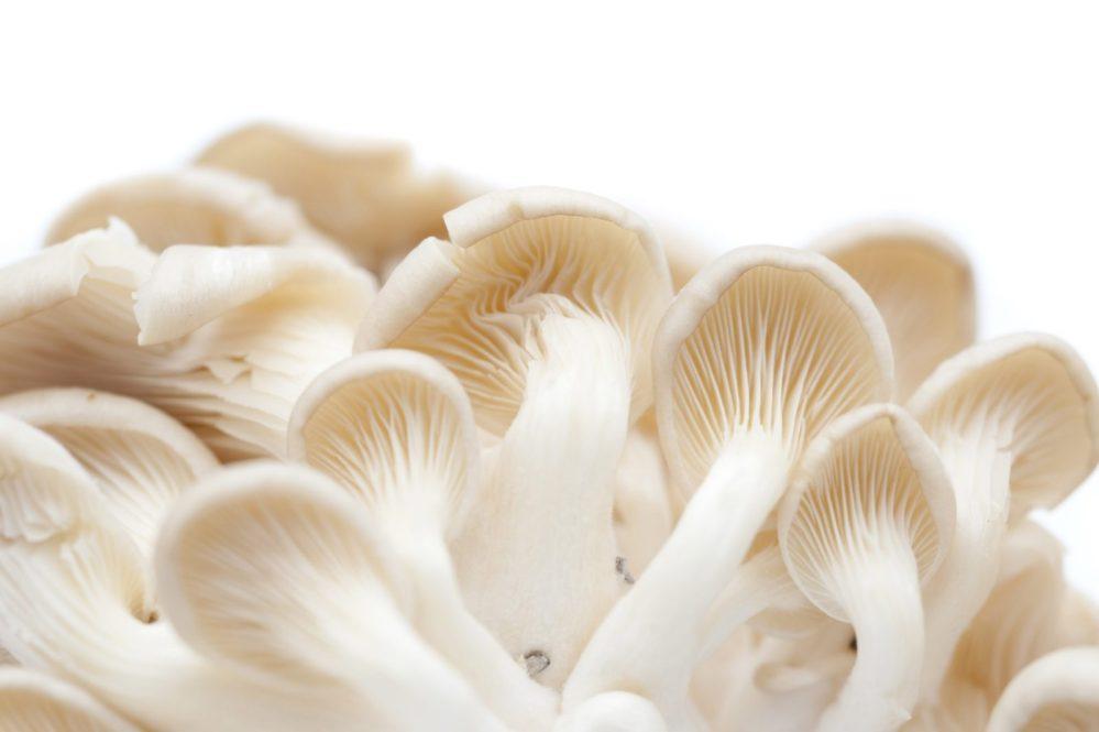 Guide de cuisine des champignons de couche, exotiques et sauvages